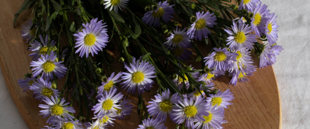 Koop biologische bloemen